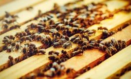 Panales de la abeja con la miel y las abejas Apicultura Efecto gráfico apacible Fotografía de archivo