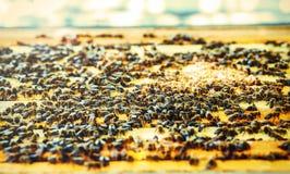 Panales de la abeja con la miel y las abejas Apicultura Efecto gráfico apacible Imágenes de archivo libres de regalías