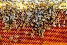 Panales de la abeja con la miel y las abejas Apicultura Efecto gráfico apacible Imagen de archivo libre de regalías
