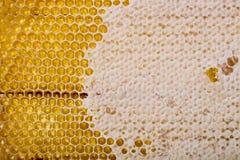 Panales de la abeja y su estructura Fotografía de archivo libre de regalías