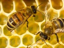 Panales de la estructura de las abejas Fotos de archivo libres de regalías