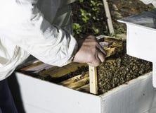 Panales de la mirada del apicultor Imagen de archivo