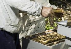 Panales de la mirada del apicultor Imagen de archivo libre de regalías