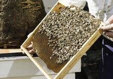 Panales de la mirada del apicultor Imágenes de archivo libres de regalías