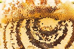 Panales dulces con la miel Imagenes de archivo