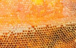Panales llenados del primer de la miel Fotografía de archivo