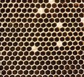 Panales llenados del primer de la miel Fotos de archivo