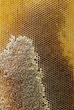 Panales llenados del primer de la miel Foto de archivo libre de regalías