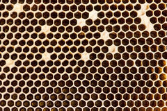 Panales llenados del primer de la miel Imágenes de archivo libres de regalías