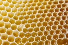Panales llenados del primer de la miel Foto de archivo