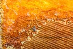 Panales llenados del primer de la miel y de la abeja Imagenes de archivo