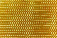 Panales naturales reales hechos de cera de abejas amarilla Imagen de archivo libre de regalías