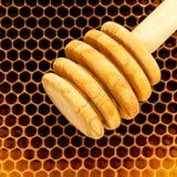 Panales orgánicos crudos del primer Honeycom nuevamente tirado de la abeja de la miel Imagen de archivo libre de regalías