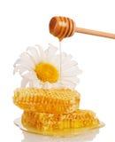 Panales y miel que fluyen abajo de la cucharón, manzanilla aislada Fotos de archivo