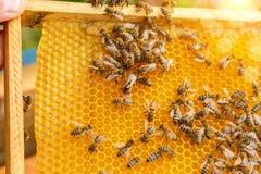 Panales y reina de la abeja Imagen de archivo libre de regalías