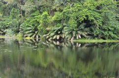 Panama Canal Rainforest. The rainforest that surrounds the Panama canal with lakes, plants and wildlife stock photography