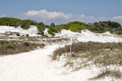 Panama City Beach Florida USA Protected Environment White Sand D. Pathway of white sand near the Gulf of Mexico in Camp Helen State park at Panama City Beach Royalty Free Stock Images