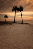 Panama City Sunset with Palm Trees Royalty Free Stock Image