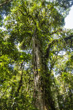 Panama jungle on Quetzal Trail Royalty Free Stock Photography