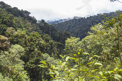 Panama jungle on Quetzal Trail Royalty Free Stock Photos