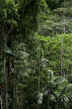 Panama Jungle Stock Photos