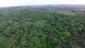 Panama natur och träd stock video