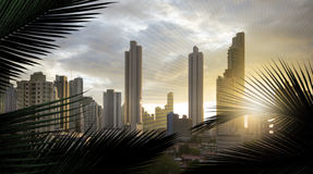 Panama panorama sunset. Panoramic view of the skyscrapers of the panama city in south america, through silhouettes of palm leaves and added, slight sun lines, to Stock Photography
