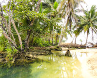 Panamanian island. In Bocas del Toro Stock Images