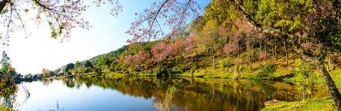 Panaorama des Seeblicks mit Blütenrosablume auf dem Berg. Lizenzfreies Stockbild