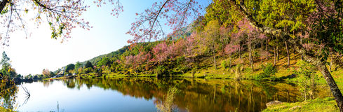 Panaorama of lake view with bloom pink flower on the mountain. Lake view with bloom pink flower on the mountain Royalty Free Stock Image