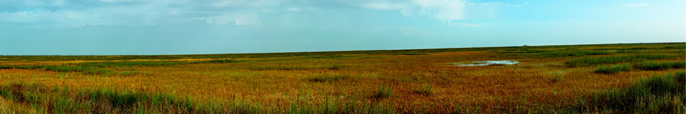 Panarama των everglades στοκ φωτογραφίες με δικαίωμα ελεύθερης χρήσης