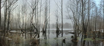 Panarama eller flod Fotografering för Bildbyråer