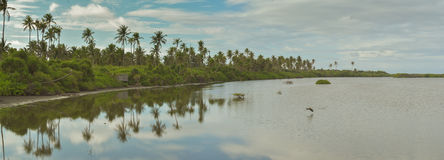 Panaromatic widok mangrowe Zdjęcia Stock