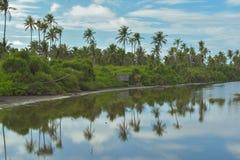 Panaromaticmening van mangrove Stock Fotografie