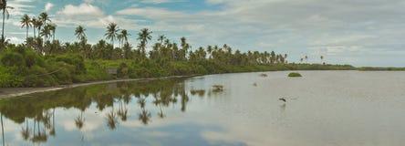 Panaromaticmening van mangrove Stock Foto's
