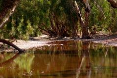 Panawonica Wasser-Loch Lizenzfreie Stockfotos