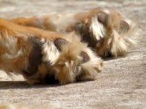 Pancadinha do cão Fotos de Stock Royalty Free