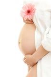 Pancia della donna incinta e fiore dentellare della margherita immagini stock libere da diritti
