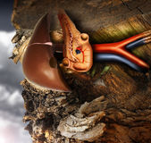 Pancreas. Abstract photo of a human pancreas growing out of a tree trunk Stock Photos