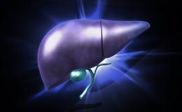 Pancreas Stock Image