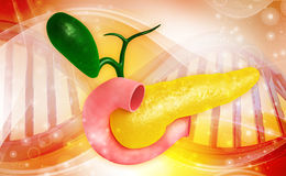 Pancreas stock illustration