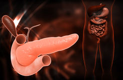 Pancreas Stock Photography