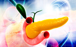 Pancreas. Digital illustration of pancreas in colour background royalty free illustration