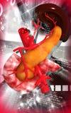 Pancreas e milza Fotografia Stock