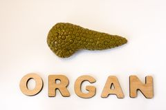 Pancreas is organ of human or animal concept photo. Pancreas gland lies near volume letters composing word organ on white light ba. Ckground. Visualization of Stock Image