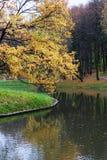Pand in het de herfstbos Stock Foto