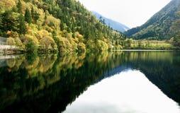 Panda湖jiuzhaigou国家公园四川 免版税库存图片