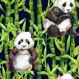 Panda με το άνευ ραφής σχέδιο watercolor μπαμπού Στοκ εικόνες με δικαίωμα ελεύθερης χρήσης