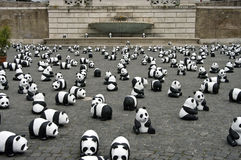 panda Ρώμη Στοκ φωτογραφία με δικαίωμα ελεύθερης χρήσης