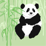Panda. Sitting, with bamboo forest as background Royalty Free Stock Image
